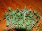 Plant Stake Stars Craft for Sunday School childrens church christmas crafts